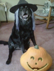 Luke loves Halloween!