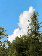 Copycat Cloud