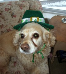 Molly-Dog Wheeler loves St.Patricks Day!