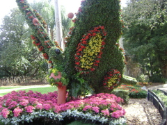A day at Bush Gardens