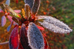 Frosty morning 12-2-11