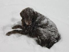 Cocoa..in his blanket of snow