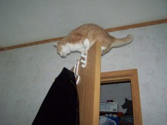 Cat On top Of a Door