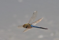 Dragonflies mean Summer is coming