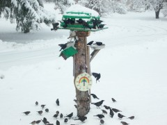 hungry birds in wintertime