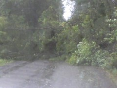 Irene Hits Harpursville