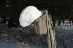 Snow Hanging on Bluebird House