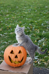 Kittens Like Jack-O-Lanterns, Too