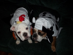 Lily and Bacon dress up for Halloween