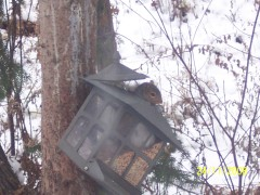 Squirrel inside birdfeeder