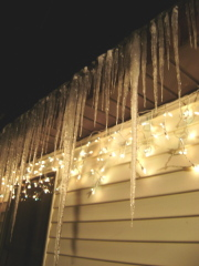 Icicles illuminated by  Christmas lights