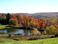 Fall Splendor Of Vestal Center