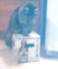 TABBY AND ITS MY BEER!!!!