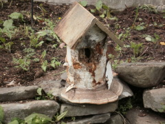 Big Birch Bird house