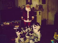 santa with his dogs
