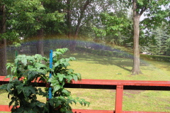 Surprise Backyard Rainbow