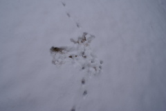 A kittens view on snow angels