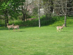 deer spring break