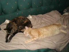 my cats...Kitty and Timmy
