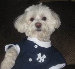 Molly Roots for the Yankees