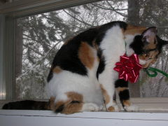 Cat Wearing a Christmas Bow