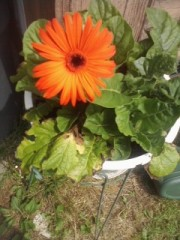 Mothers Day flower