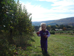 Apple Picking at Fiato's Orchard