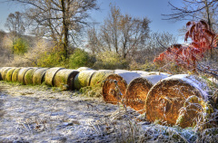 Frosty Farmer's Field!
