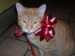 Peaches wearing a bow.