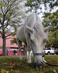 Suarez the Circus Horse Fueling Up...