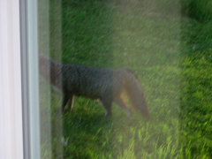 surprize visitor early morning