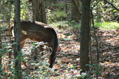 Local deer don't startle easily