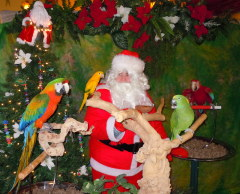 Even parrots love Santa too