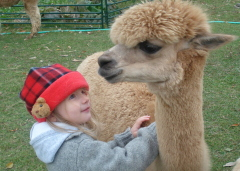 Falling in Love with Alpacas