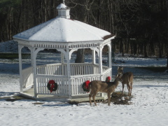 Gazebo Visitors