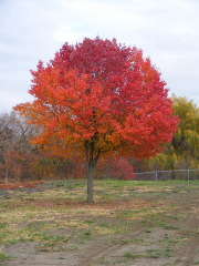 Multi colored tree adds color