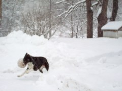 see dogs can play in the snow too!