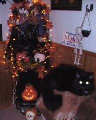 Halloween Cat with Halloween decorations
