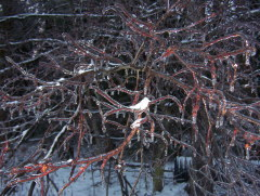 Ice storm that affected my mom and dad's