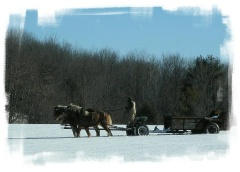 Horses spreading the wealth near Rte 23