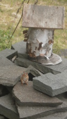 chipmunk birdhouse?