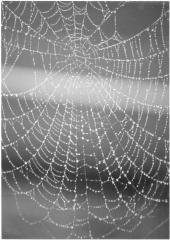 Web in th fog
