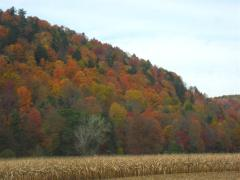Fall Colors in the tier