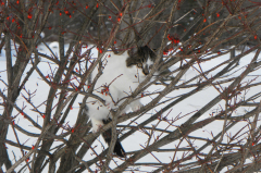 Stalking Cat in Burning Bush