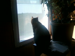 Maria watching the birds